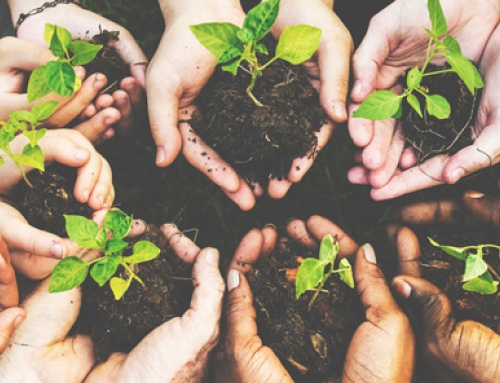 Many hands with new plants